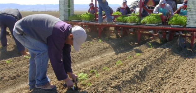 desempleo agricultura