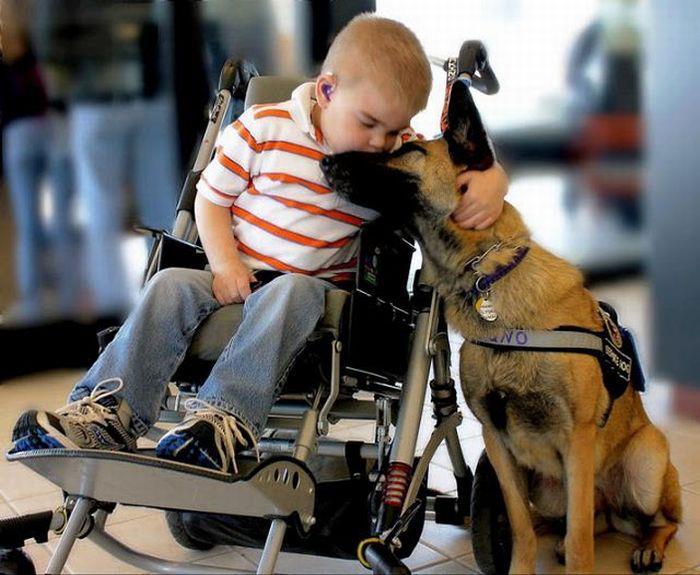 el-perro-el-mejor-amigo-del-hombre