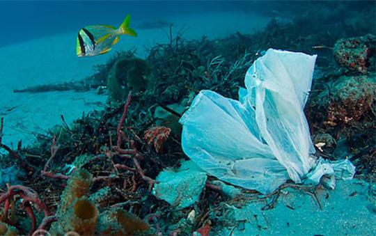 plásticos-mediterráneo-residuos