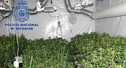 operacion-trafico-cannabis