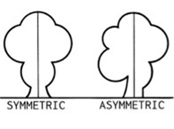 asimetrias