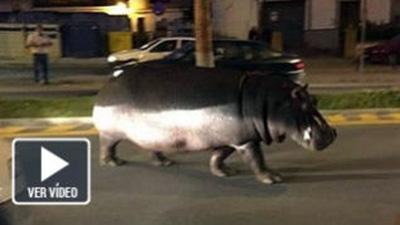 hipopotamo-huelva