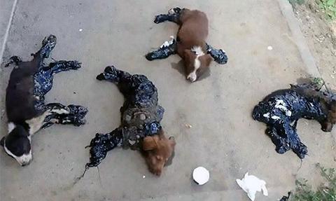 cachorros-cubiertos-alquitran-perros