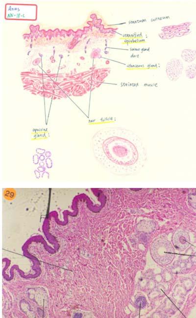 ano-dibujo-biologia