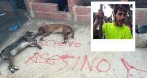 perros de Cachobo asesinados