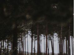 Un hombre pasea con su hija a su perro en el bosque