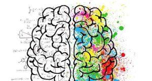 Cerebro y los colores
